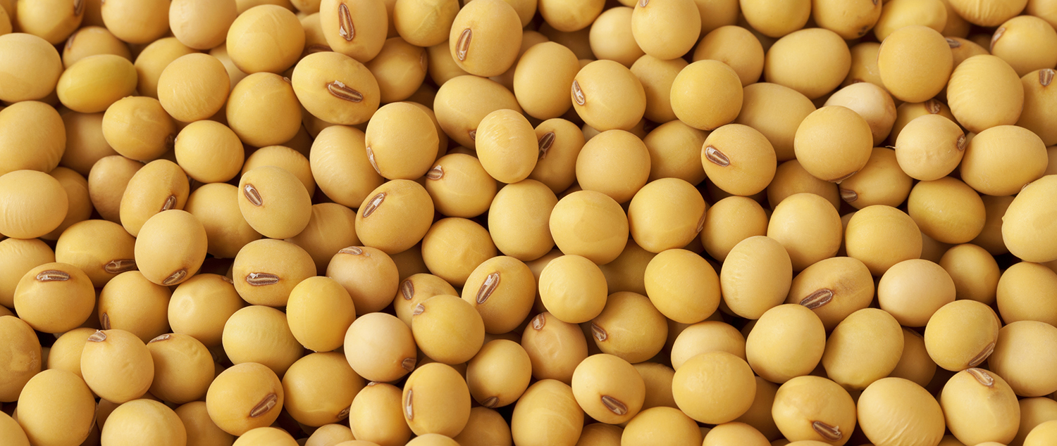 soybean-news